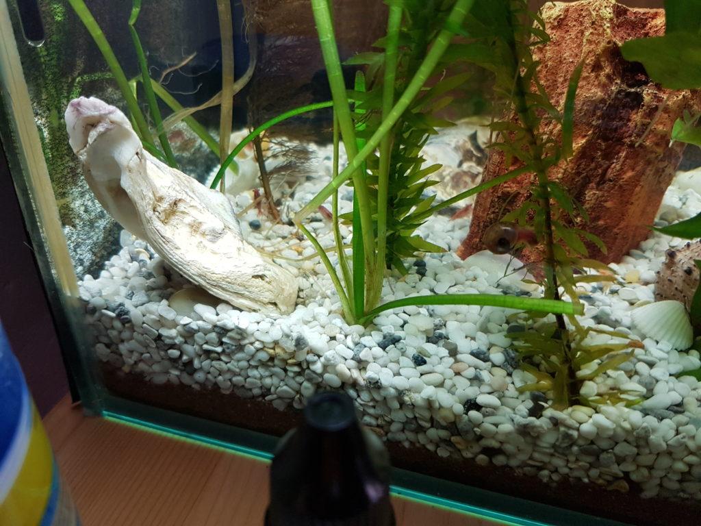 Fertiges Aquarium